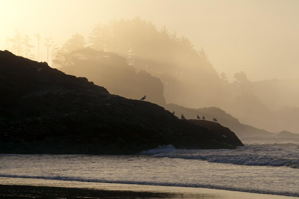 First rays of the day penetrate sea mist on Chesterman Beach, Tofino.  The full moon low tide allowed me to access areas of the beach for a most pleasing perspective.  Will this view be possible in the future?