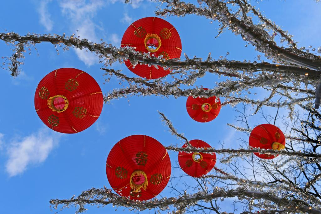 Chinese lanterns are found in a tree on Granville Island B.C.  In Chinese culture, Chinese lanterns are hung to create a festive atmosphere because they symbolize reunion.