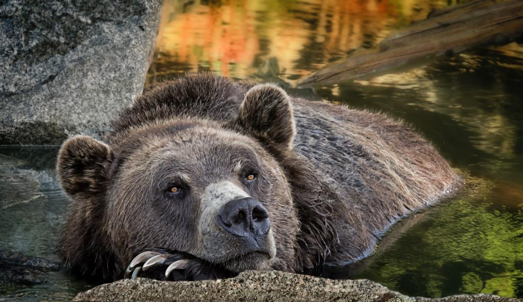 Two resident male Grizzly bears, Coola and Grinder, were rescued as orphans in British Columbia in 2001 and live in a natural habitat, complete with a hibernation den. Sustainability through research, education and conservation programs.