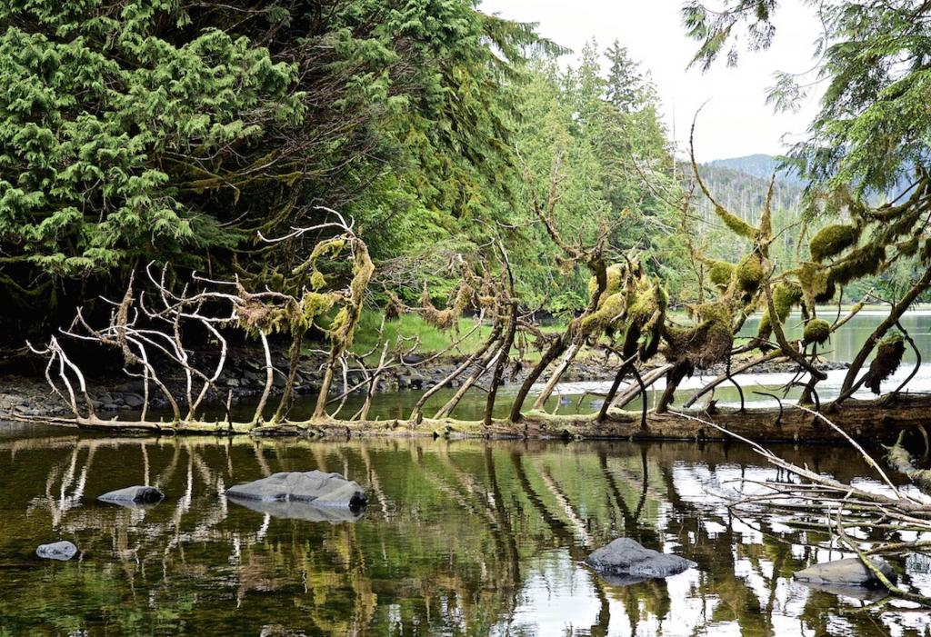 Shot in Haida Gwaii, we were hiking up the river and I noticed this group being lead across the river.
