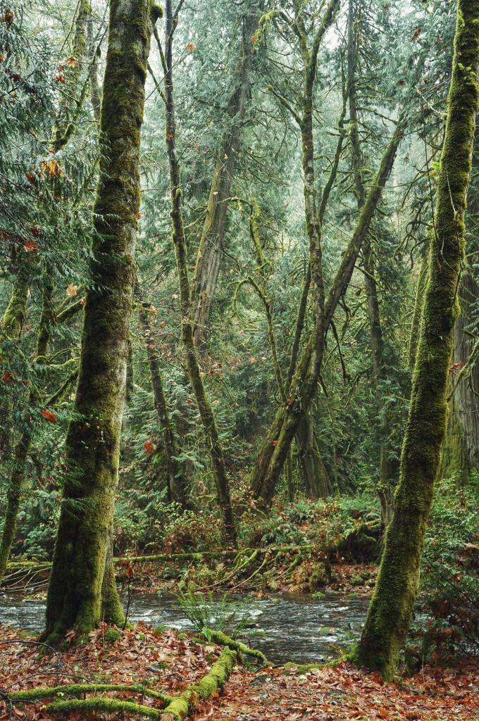 When one ventures in the coastal rain forest of British Columbia, It is almost impossible not to feel the connectedness that exists between all the species of this rich and complex ecosystem but also with us, human of this world.Picture taken in Goldstream Provincial Park on Vancouver Island