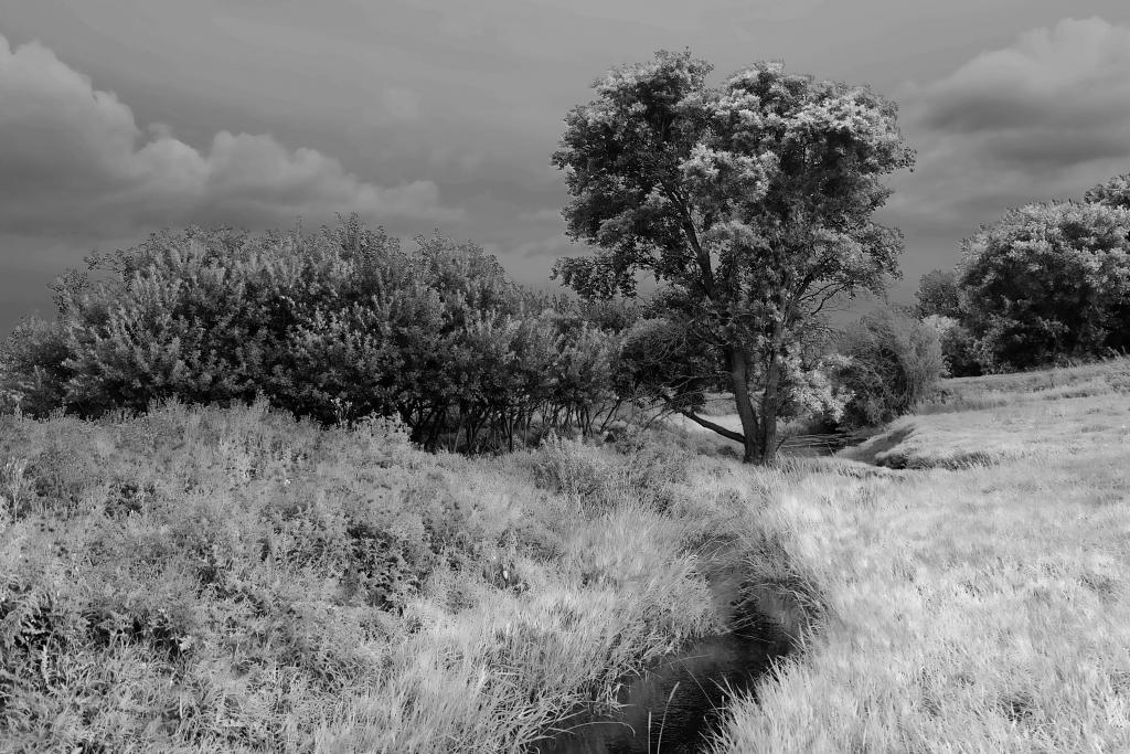 Infra red take on sheep pasture area on cousins farm
