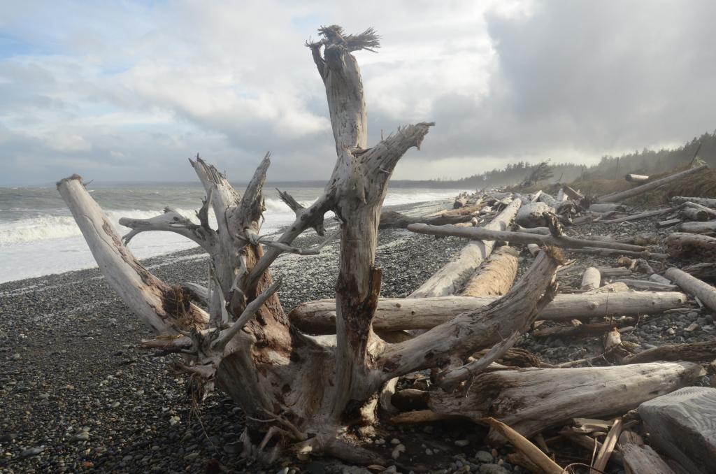 Haida Gwaii seascape