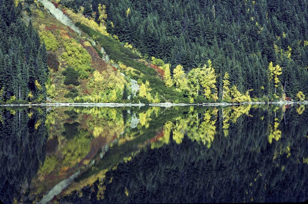 The shoreline of Duffey Lake reflected on the mirror smooth water surface.Duffey Lake is situated between Lillooet and Pemberton.