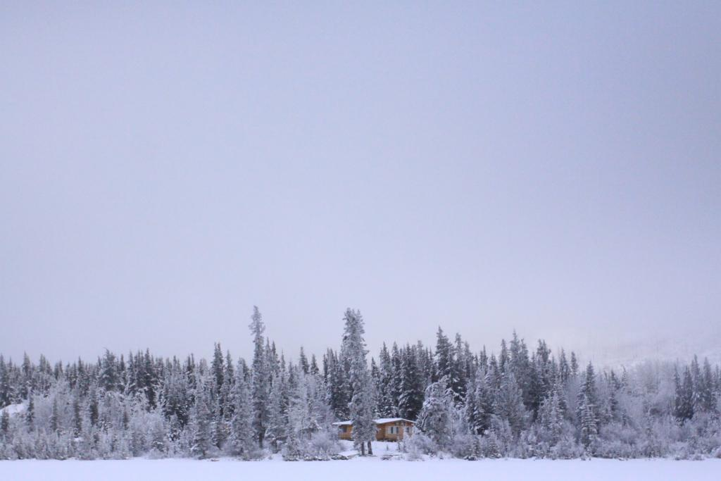 A cabin rests peacefully in a wooded area by Little Fox Lake in Whitehorse, Yukon.