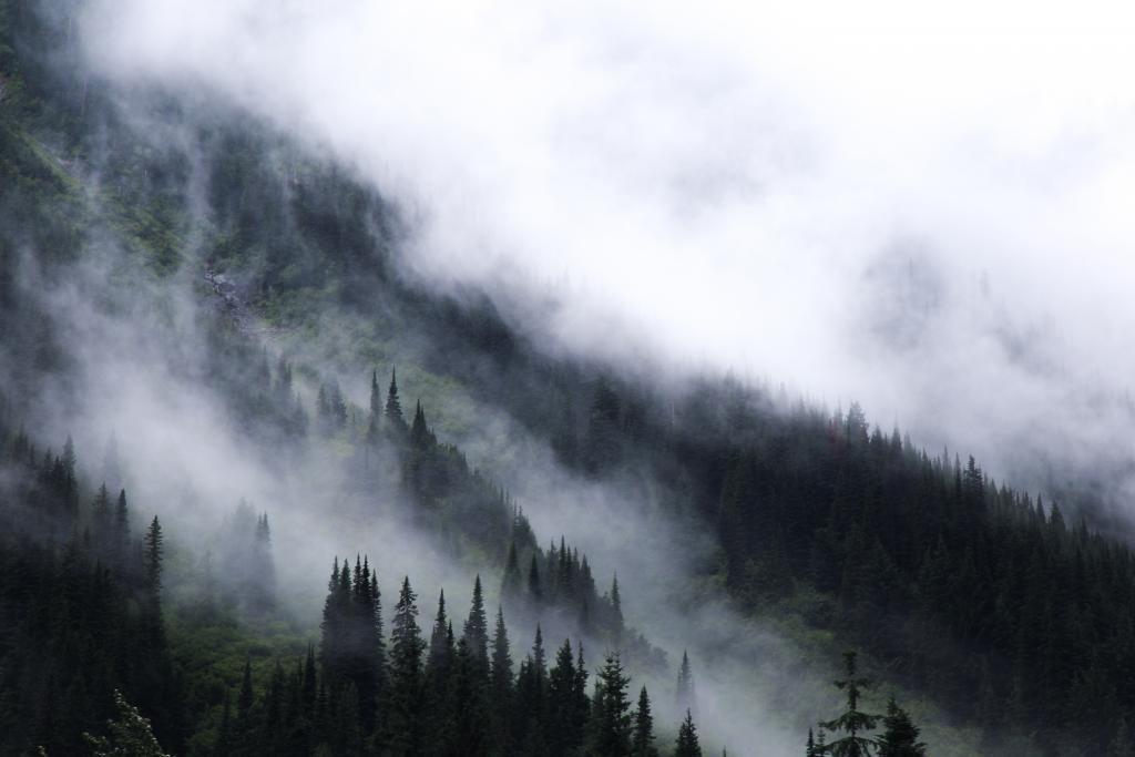Foggy drives through interior British Columbia