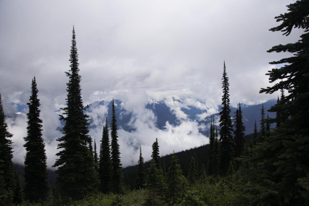 Mount Revelstoke in summer