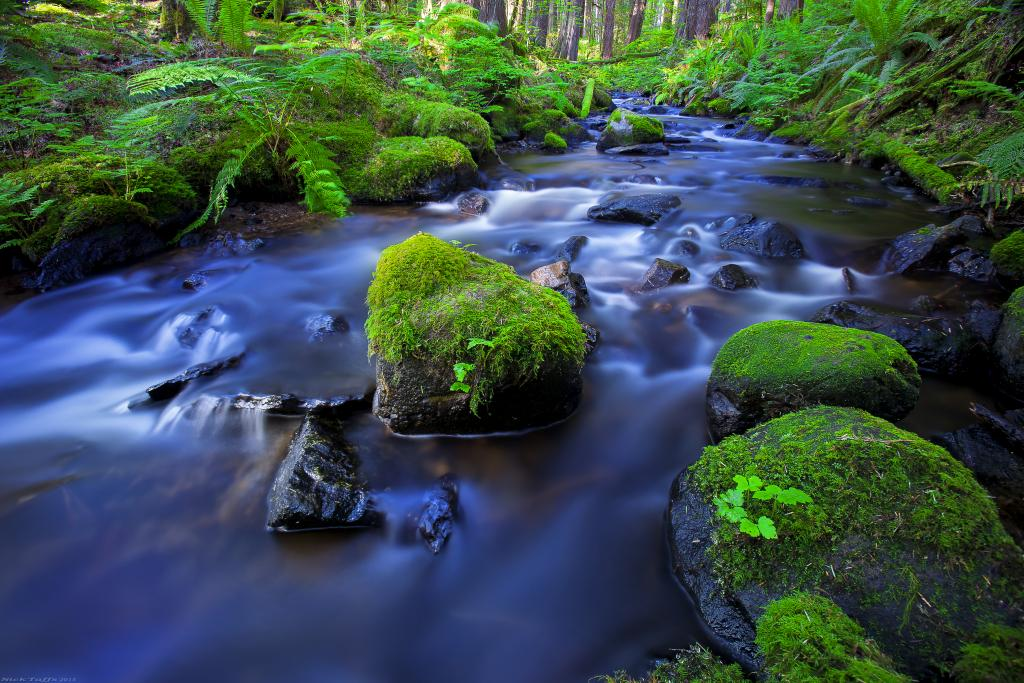 I found this little creek some time ago on a quick trip to the coast. It is a tucked away gem near the town of Whistler. The next trip I made that way, I decided to make a stop and attempt to document it. This is my favourite shot I walked away with. This is actually what it looked like in there. Photographing this area is extremely hard due to the complexity of the forest. This creek breaks up the image and gives it some flow. I used a polarizing filter to capture the water with these gorgeous hues.