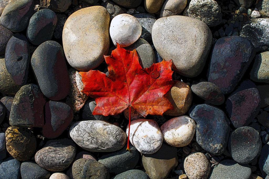 The stones represent the rock solid people of Canada. The maple leaf represents Canada being carried by the people. The water drop is for humanity.