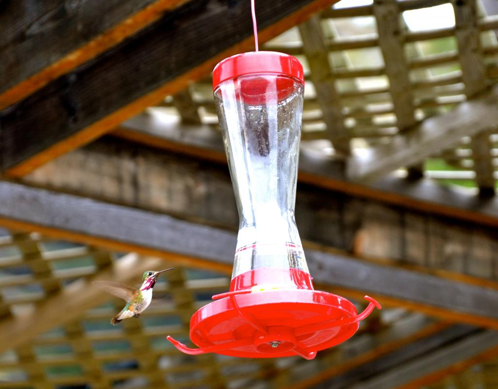 A shot of a calliope hummingbird captured at the Osoyoos Desert Center in B.C.