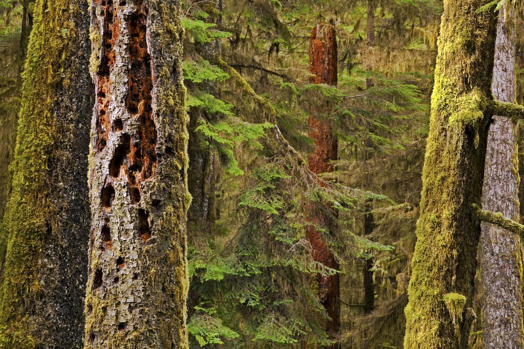 Pacific Rim National Park showcases our West Coast Rain Forest.