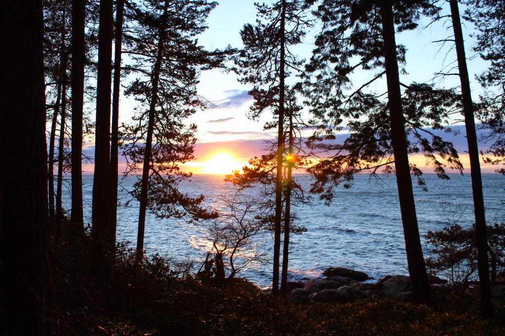 A multicoloured winter sunset peeking between the trees at Lighthouse Park in West Vancouver, British Columbia.