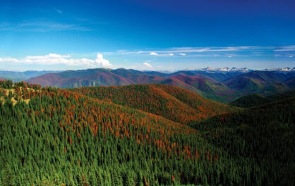 Can B.C.'s forests cope with climate change?