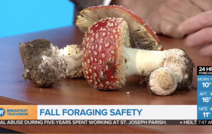 Fall Foraging Safety
