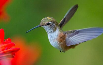Douglas Altshuler on the flight of birds